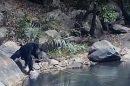 Observan a los chimpancés haciendo algo nunca visto hasta la fecha