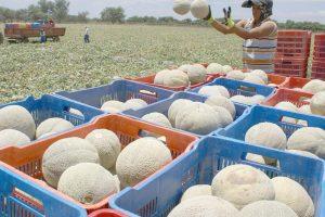 melón honduras exportación TAIWAN